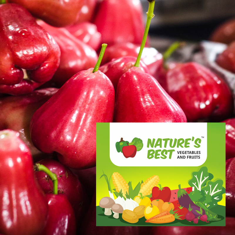 Rose Apple Fruits Pictures