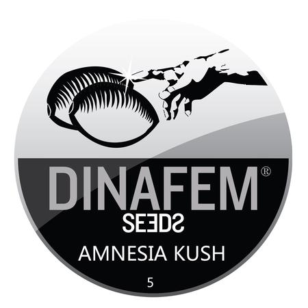 SEEDS, Little Goa, Dinafem Amnesia Kush Feminized Seeds (Pack Of 5 Seed)