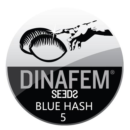 SEEDS, Little Goa, Dinafem Blue Hash Feminized Seeds (Pack Of 5 Seed)