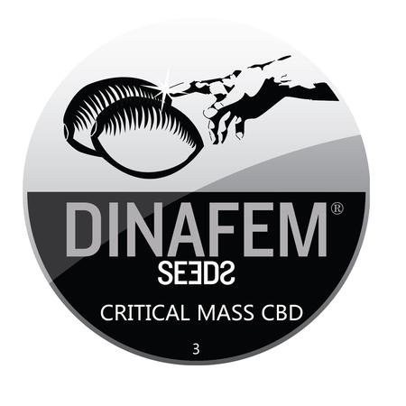 SEEDS, Little Goa, Dinafem Critical Mass CBD Feminized Seeds (Pack Of 3 Seed)