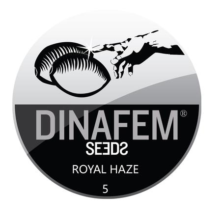 SEEDS, Little Goa, Dinafem Royal Haze Feminized Seeds (Pack Of 5 Seed)
