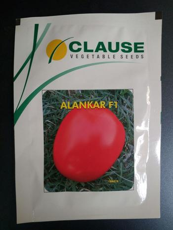 Tomato, Vegetable seed, Seed, Clause Seeds , Clause Tomato Seed Alankar F1