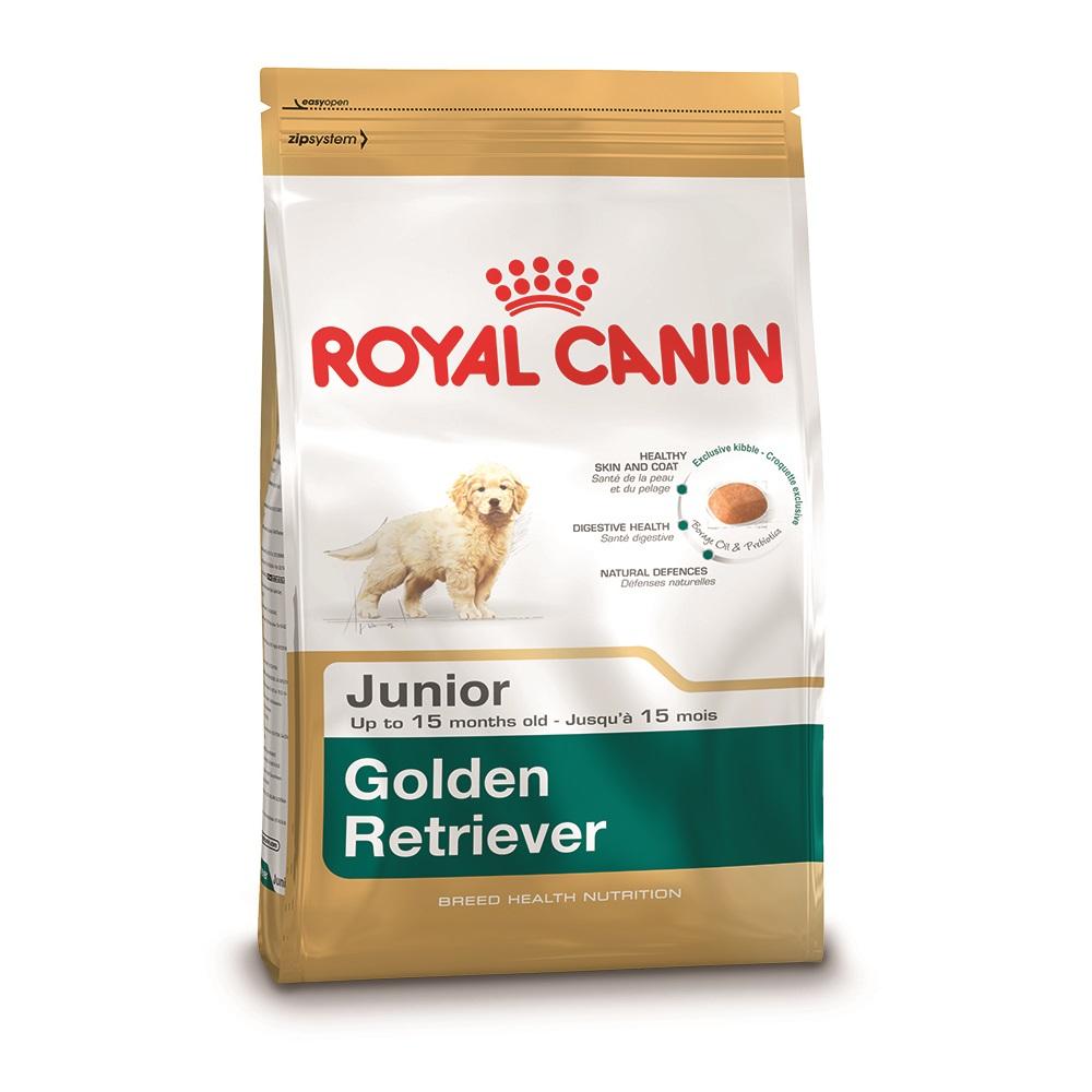 Golden Retriever Puppy 12kg